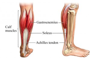 lower leg anatomy and torn achilles tendon