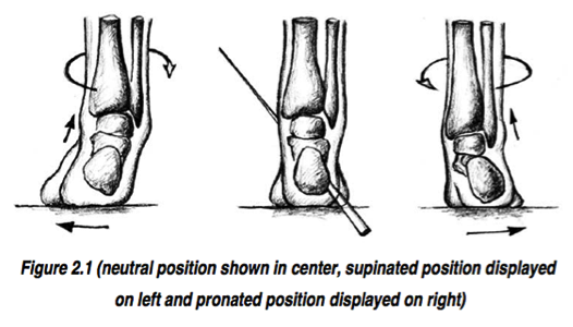 Picture of supinated foot position on left, neutral foot position in center, and pronated foot position on right