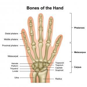 Image result for Hand anatomy